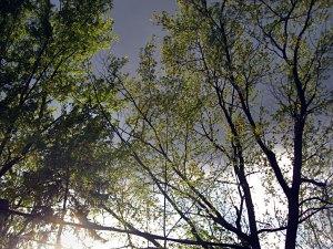 ephemeral spring leaves