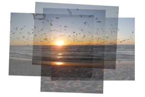 gulls and terns at sunset