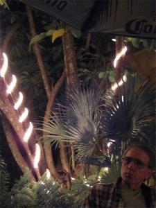 Cilantro Tamale Restaurant, Naples, Fl.