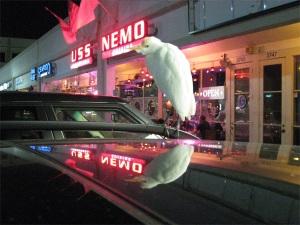 USS Nemo Restaurant Naples, Florida