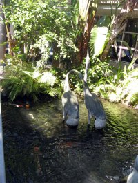 Fish pond at the hotel