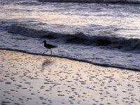 Wave running bird