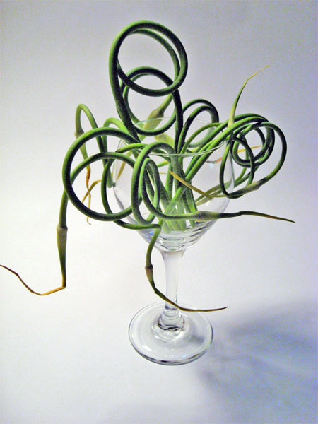 garlic-scapes_6672