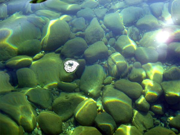 bubbles_7794