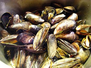 mussels_8731