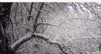 snowy-tree-3_3400