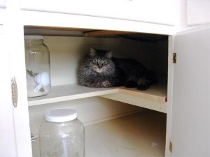 mikey-cupboard_3660