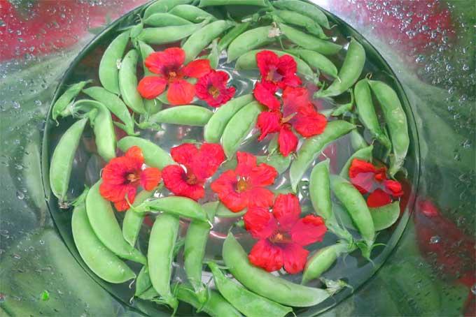 peas-and-nasturtium_2675